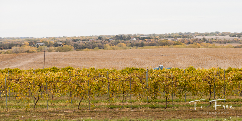 Outdoor Nebraska vineyard wedding.